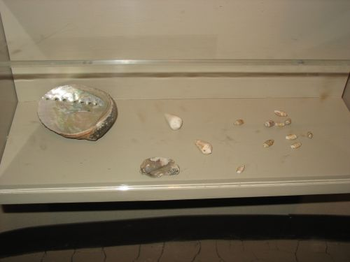 Shell Display at Visitor Center Museum