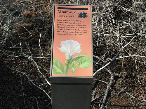Datura Sign, Pipe Spring National Monument
